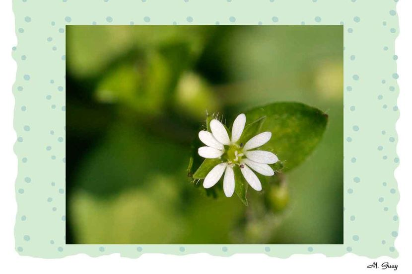 fleur-aquarelle-6313.jpg