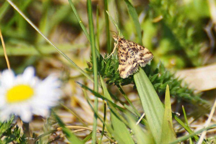 papillon-doublure-jaune-198.jpg
