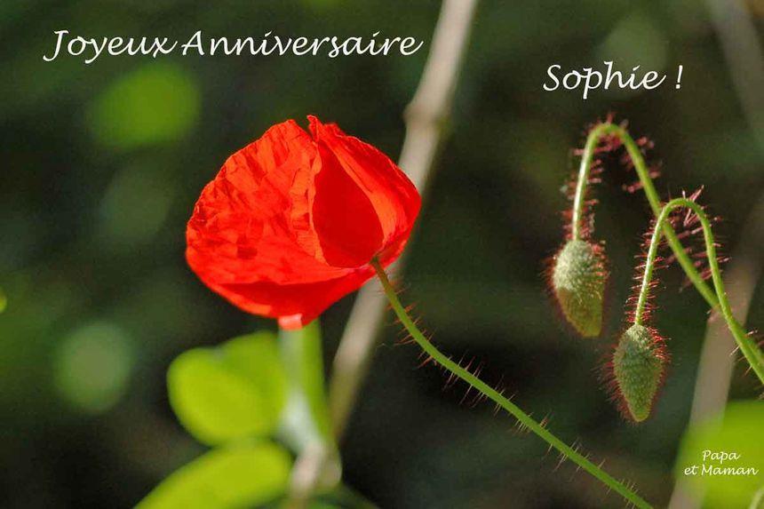 Joyeux Anniversaire Ma Sophie Les Yeux De Ma Vie