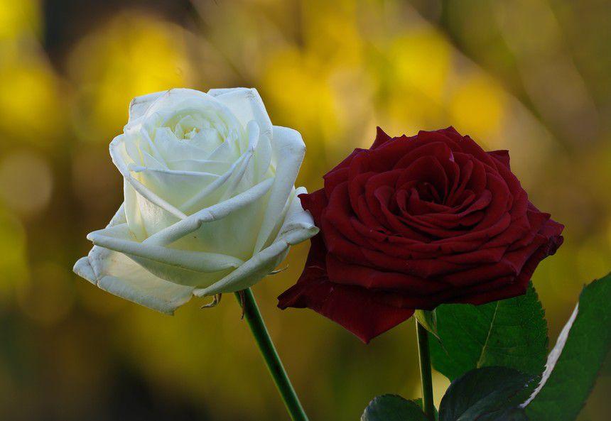 Rose Et Blanche : Bouquet fleurs artificielles roses rouges
