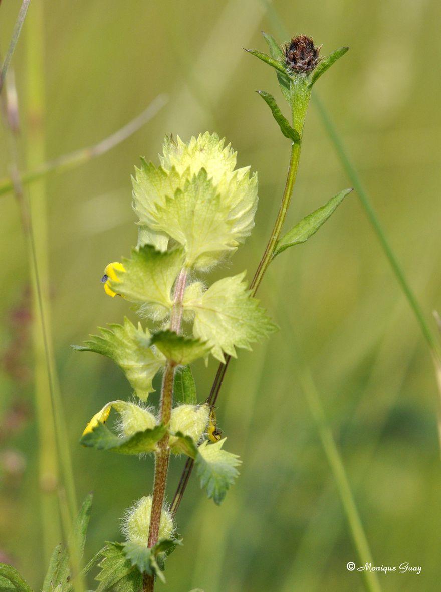 fleur-0026.jpg