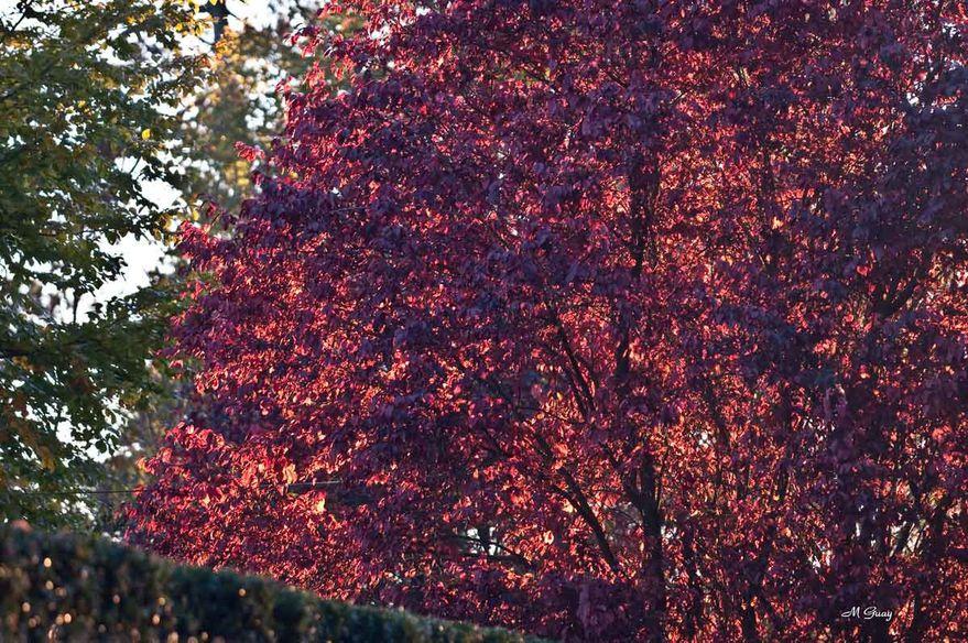 feuilles-rouges-0459.jpg