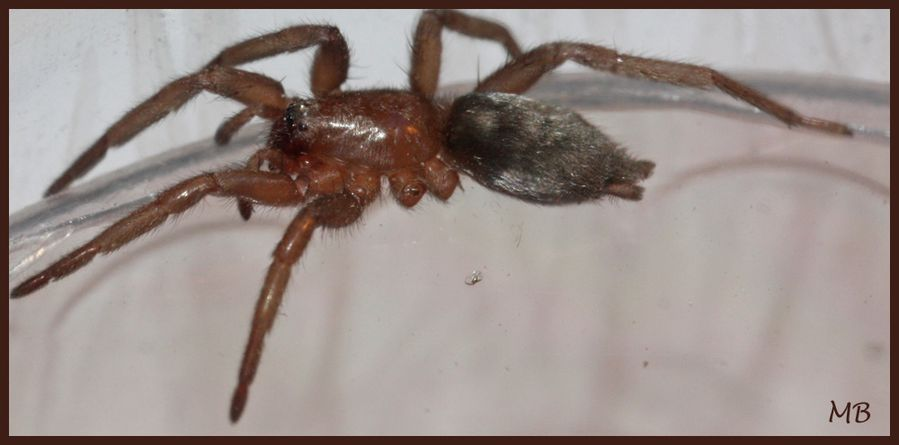 Arachnides 02 9140