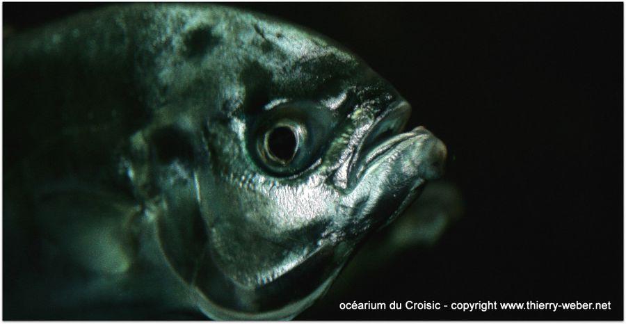 ocearium-croisic (36)