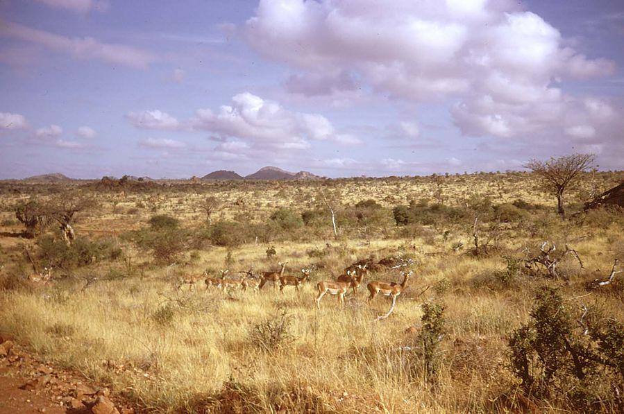kenya-2 0005