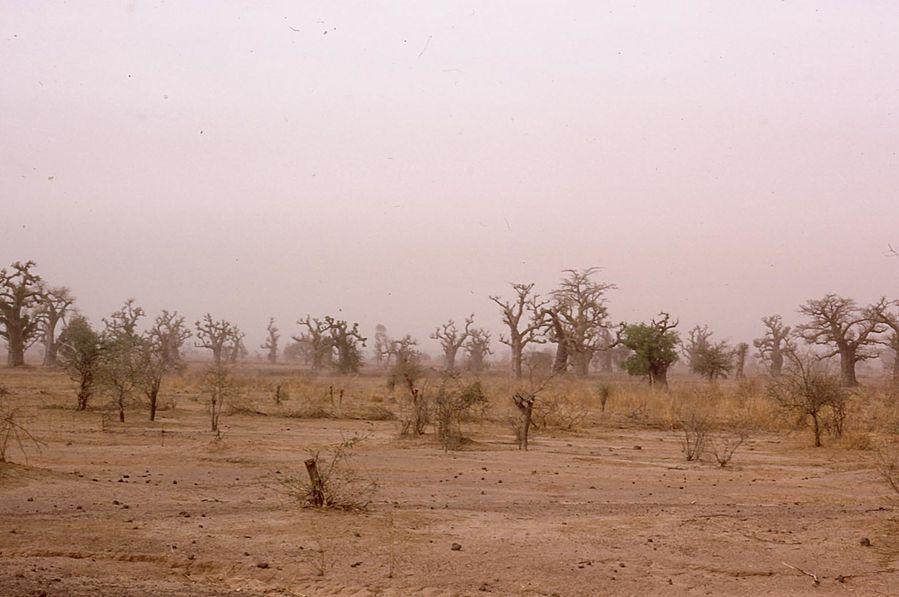 nigeria-et-niger 0066