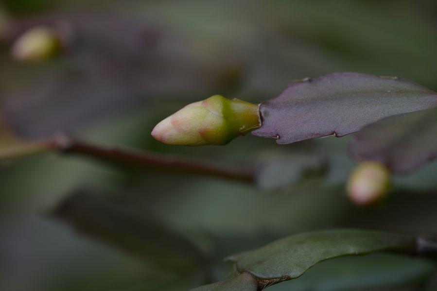 blog5-2014-4056.JPG