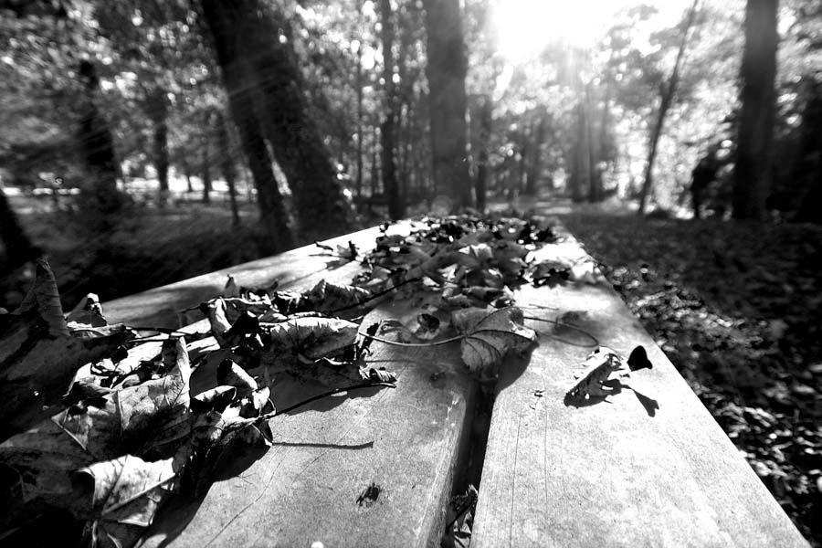 les-feuilles-mortes.jpg