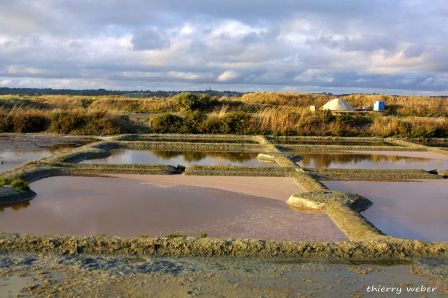 dans-les-marais-salants-de-guerande (47)