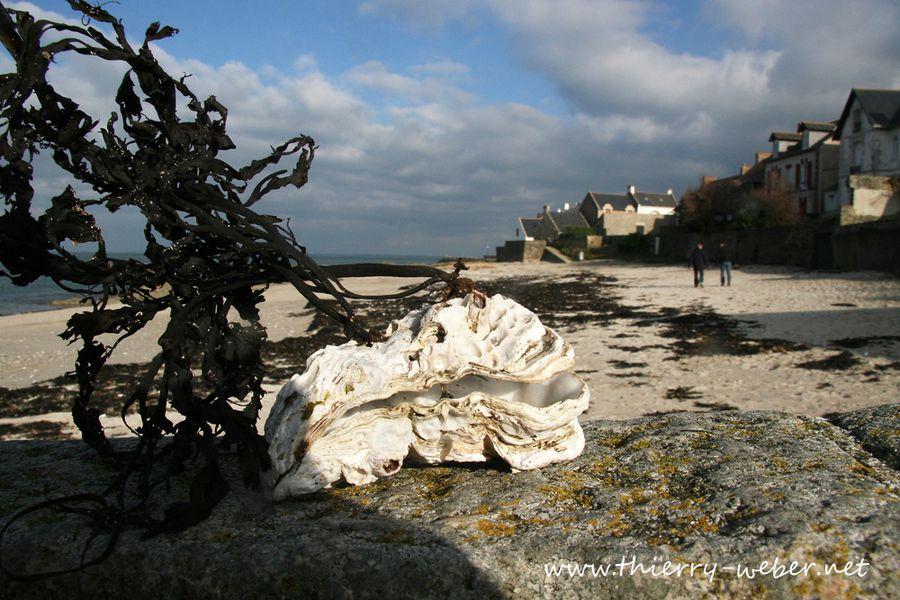 piriac-sur-mer (16)