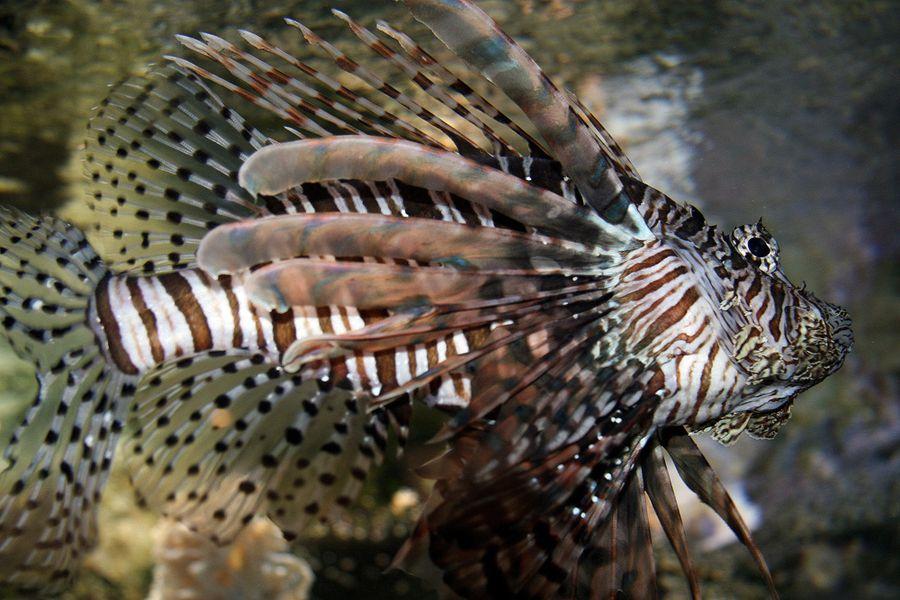 les-poissons (4)