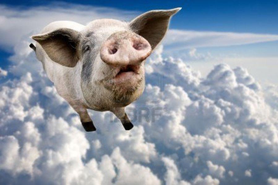 cochon-volant.jpg