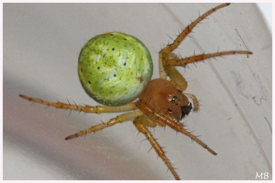 Arachnides-04-5997.jpg