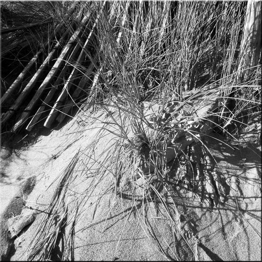 dunes-et-plages (16)-copie-1
