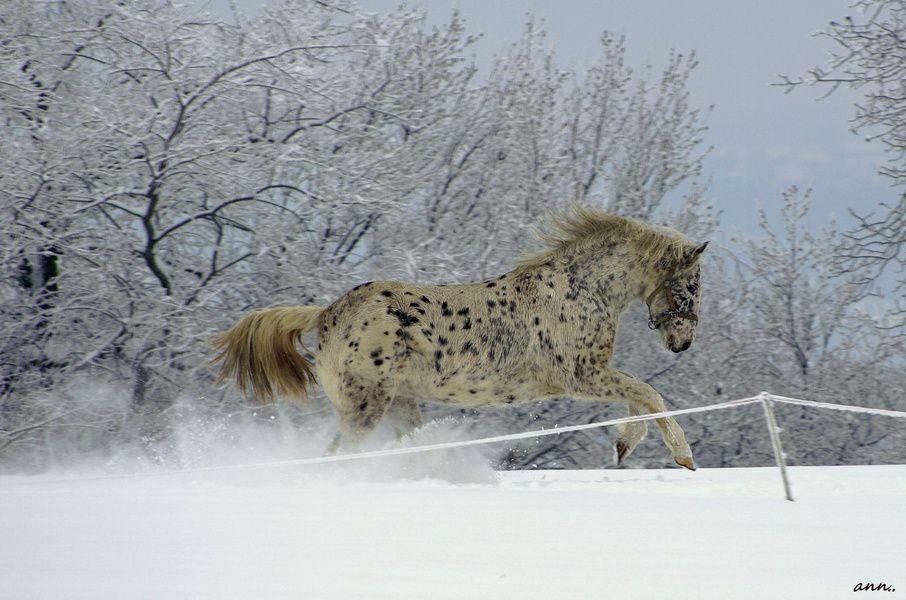 cheval 3 ob1