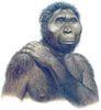 zinjanthrope primate