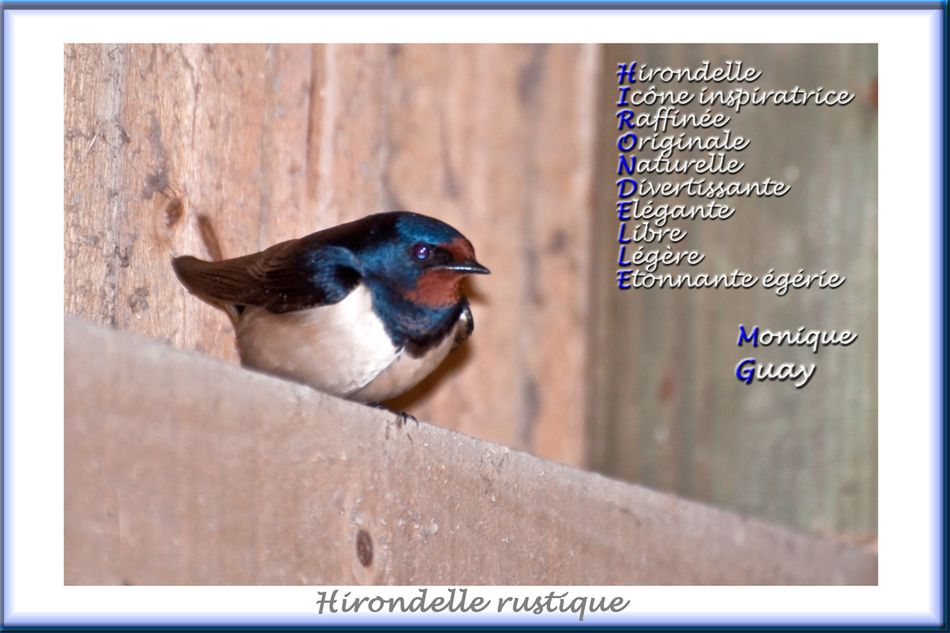 hirondelle-acrostiche-web-1.jpg