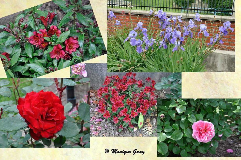 panel-fleurs-2-1.jpg