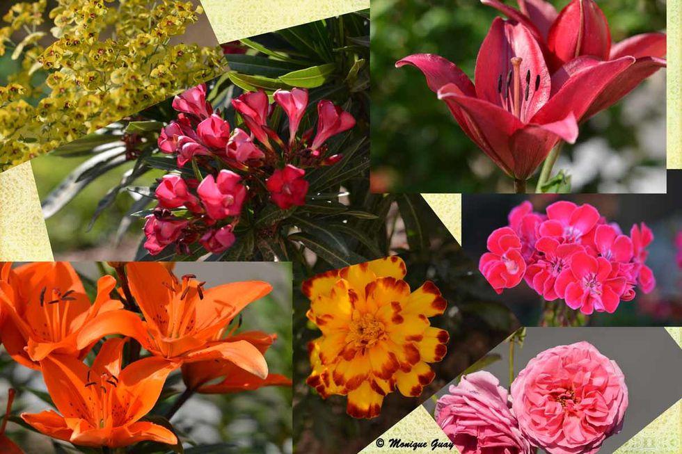 panel-fleurs.jpg