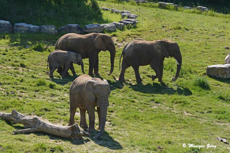 elephants-7134.jpg