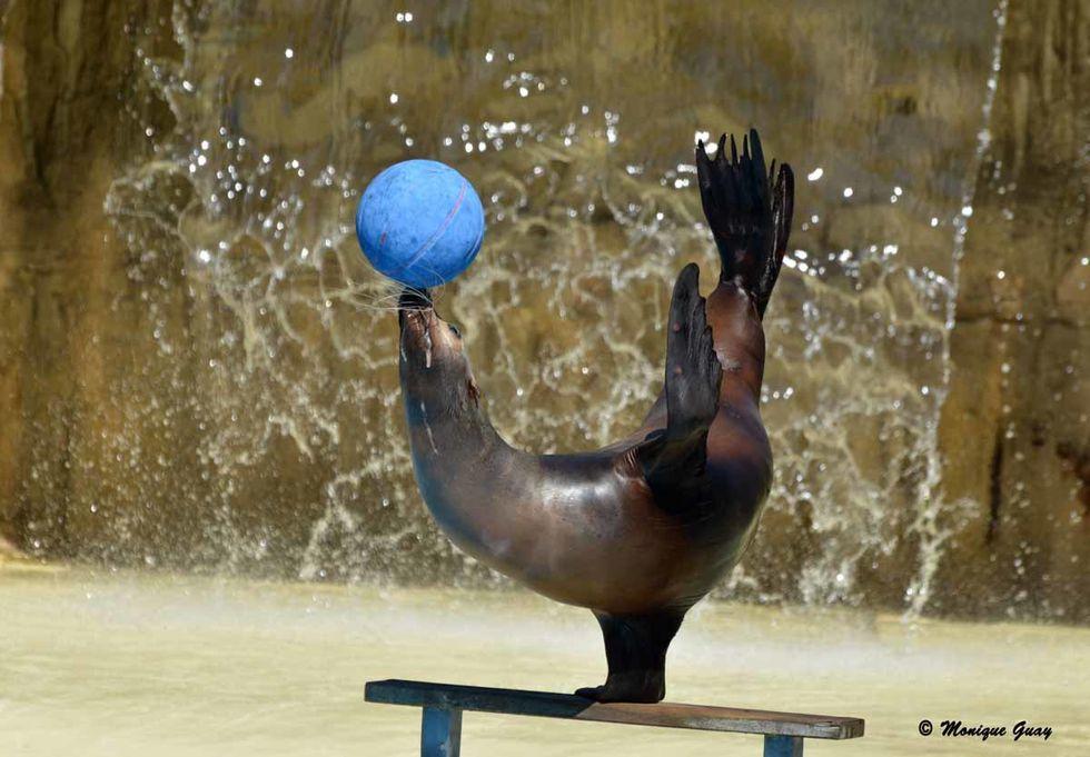equilibre-ballon-6642.jpg