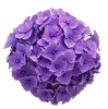 CAJ.SCR.FR-PURPLE-FASHION-5.png
