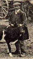 mini-A nos vaches (4)