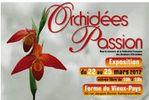 orchideespassion.jpg