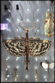 2012-Octobre---Grande-Galerie-de-l-Evolution-17a.jpg