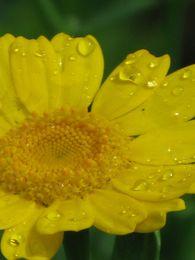 jaune3.jpg