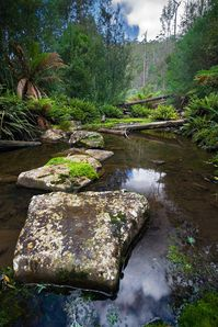 Sandspit_River_Wielangta_Forest.jpg