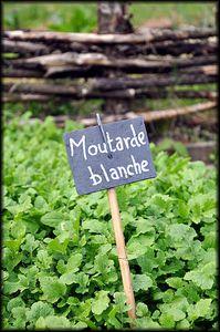 Manoir-et-domaine-de-Courboyer-9a.jpg