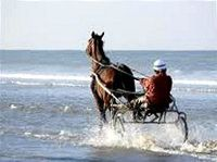 Cabourg Cheval