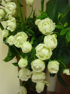 petites-roses-blanches.JPG