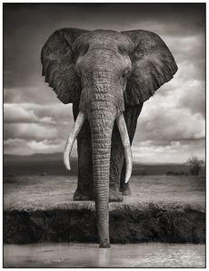1-Elephant-Drinking.jpg