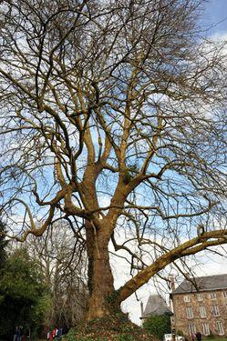 arbre-3030-LeVasterable