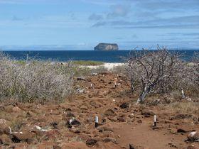 Galapagos--EQUATEUR- 8552