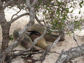 Galapagos--EQUATEUR- 8702