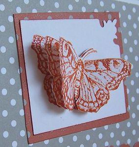 carte papillon2
