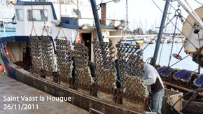 coquille-112011-100