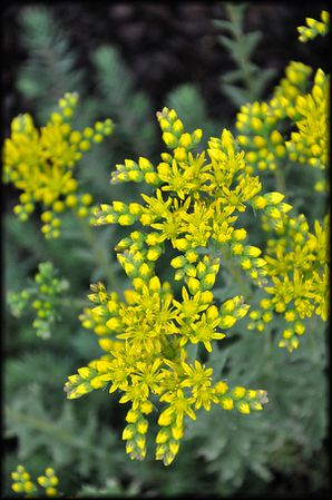 Gateau-ananas-et-noix-de-coco-3a.jpg