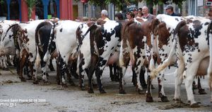 vaches-040