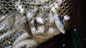 EU_ban_fisheries.jpg