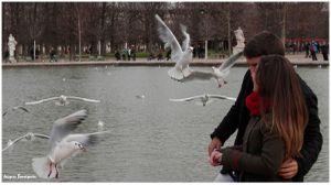 mouettes parisiennes 4