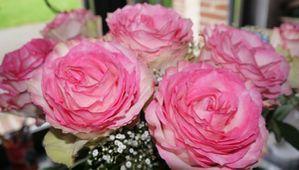 fleurs-de-caroline.jpg