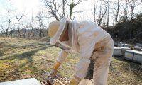 Abeilles-inquietante-mortalite-qui-touche-les-abeilles.jpg