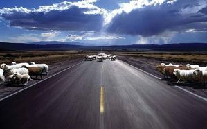 Sheeps_on_the_Road1.jpg