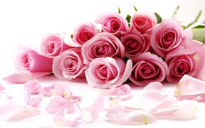 awesome_roses-wide.jpg