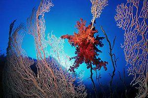 jardin-corail.jpg