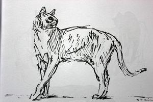 chats-steinlen-002.JPG
